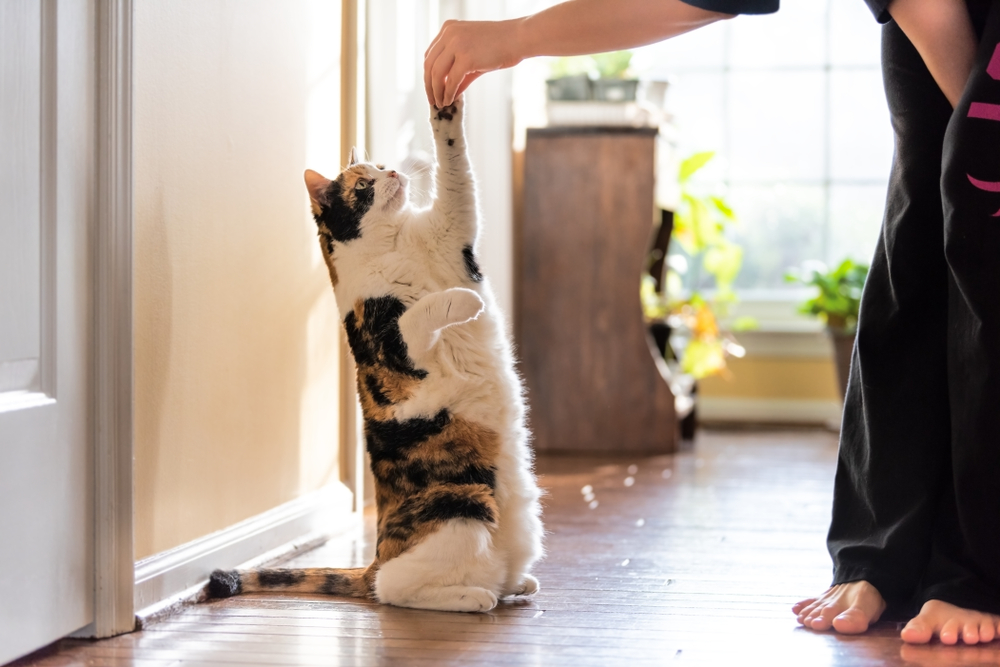 Training Your Pet: For Their Safety and Your Sanity