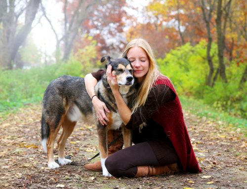 Questions Every Pet Owner Has About Euthanasia But is Scared to Ask