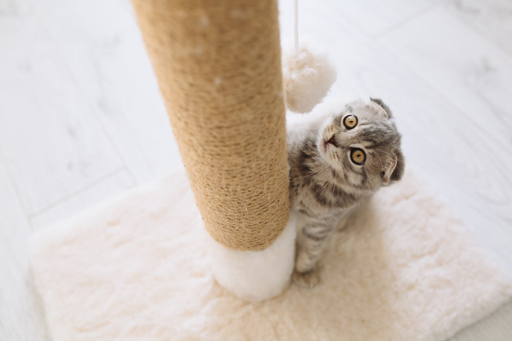 What Every Cat Owner Needs to Know About Environmental Enrichment