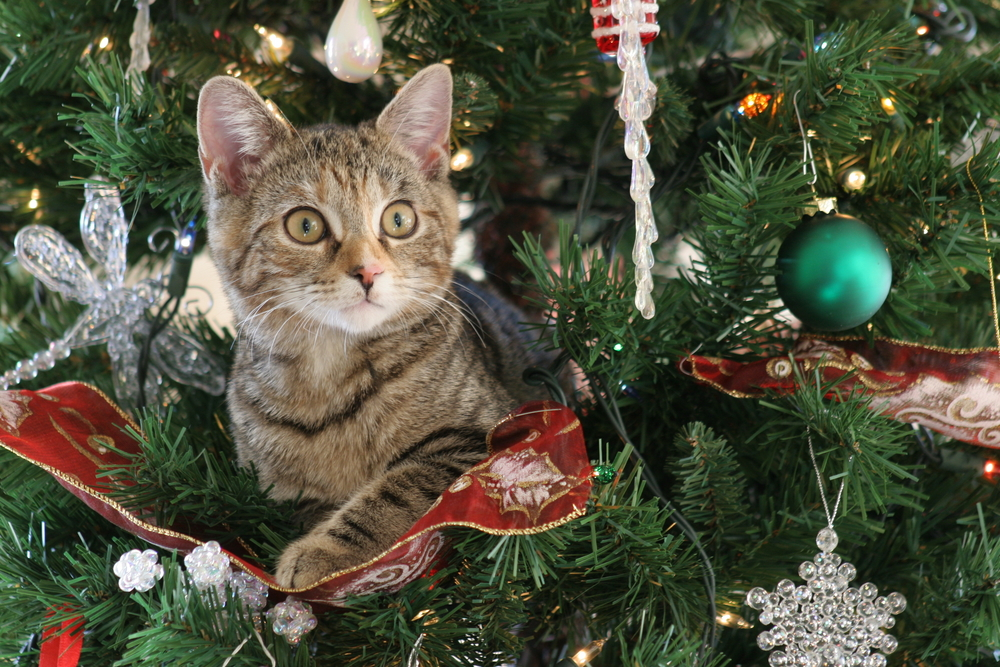A Pet Owner's In-Depth Guide to Holiday Safety